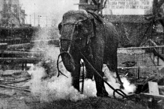 330px-electrocuting_an_elephant_edison_film_1903_frame_shot