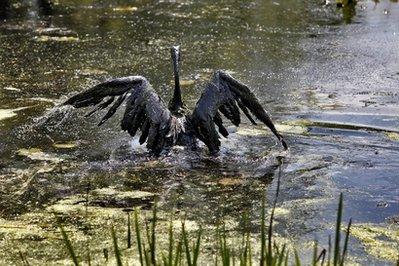 APTOPIX Michigan River Oil Spill